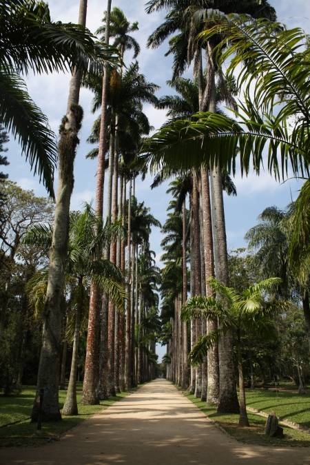 The tall palm trees are the highlight of the garden